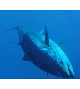 Video Tonni Giganti con AB1 Tackle e Zambofishing Adventure